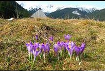 Tatry - Góry - Tatra Mountains / Tatra Mountains - TATRY Polskie, góry, szlaki górskie  #Tatry #Tatra #Mountains #Poland #Polska #góry #Chochołowska #krokusy #Matuszyk #Adam