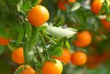 Wij houden van oranje! / Het woord oranje is afkomstig van het Perzische narang, dat sinaasappel betekent. Oranje is een kleur die zich in het spectrum tussen rood en geel bevindt. De kleur oranje komt vrij weinig in de natuur voor. Symbolische betekenissen zijn tweeledig - vreugde, goede gezondheid, creativiteit en warmte aan de ene kant; oppervlakkigheid, lawaai en trots aan de andere kant. In Nederland staat de kleur oranje symbool voor het koningshuis en alle nationale sportteams.