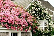 Nantucket / Kick up your feet with a good book and a coastal breeze.  Or just browse through these quaint and charming images that bring you to the seaside cottage of your dreams.