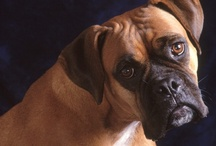 BOXERS/ROTTWEILERS / by Cathy Grandstaff