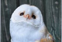 Owls! / by Seri Kimball