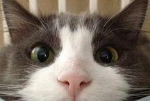 Who run the world? Cats. / by Seri Kimball