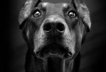 Puppy Love / by Heather Stevens
