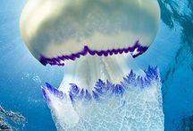 anemone and jellyfish