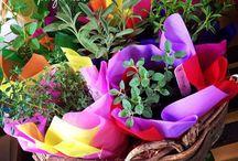 minifúndio / jardinagem