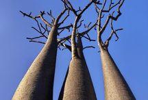 Arvoredo / Árvores