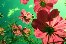Lots of Flowers / by Planet Janet