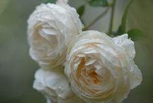 Gardening - Ornamental Flowers/Plants / by Kelly Worthington-Hardy