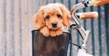 puppies|animals / Cute cuddly animals that will bring a smile to your face.