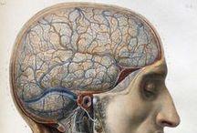 Medical and scientific illustration