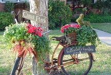 Container Gardening / by Lynda Cormier