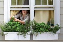 Urban gardening / by Caitlin Dewey