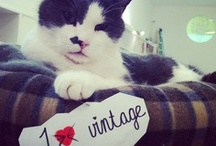 Charlie was Here / Charles was the beloved ILV cat, a true Emperor of Vintage. He passed away in June '13