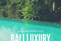 bali|travel tips / Bali Travel Ideas