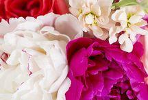 wild and free. / i want to grow a beautiful garden. / by Jane Pilanski