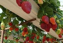 grow you fruit