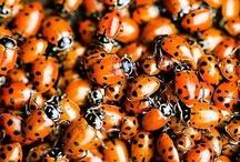 bug zappin' trappin' & attractin'