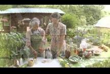 herbs, teas, tinctures