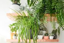 Indoor Plants // Succulents / Succulents, terrariums, indoor plants, plants in home decor, plant decor, DIY planters, DIY plant arrangements, DIY succulents, DIY terrariums, hanging plants, DIY plant hanger, how to care for succulents, indoor plant care, easy indoor plants, how to plant succulents.