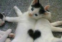 Miaoooo - cats are cool