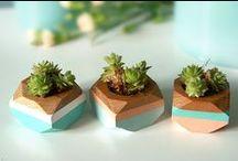 Ofis Bitkileri / Ofislerimizde yeşil alanlar oluşturalım. Hem havamız temiz kalsın hem de ferah bir ortam oluşsun.