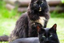 J'aime les chats / by Mademoiselle Setsuko