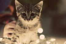 Cutie-pie!