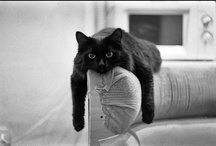 Black Cats / by Pam's Dog Academy