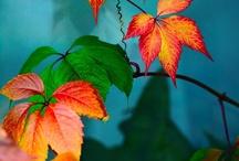Photography ~ Autum Colors / Photography ~ Autum Colors / by Sabrina Stalder-Nelson