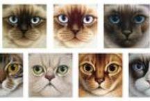 arte gatuno / arte felino