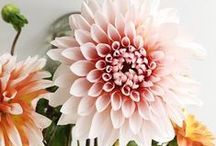 Fleurs / Favorite flowers (fleurs) should be enjoyed everyday not just on special occasions.