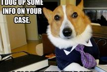 » Lawyer Dog Meme « | #Dig8talSavant / He didn't go to law school but he still passed his state bark exam with flying colors. So, keep him in mind next time you need beagle representation.