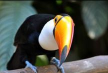 Wildlife of South America