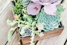 Yard ~ Succulents / by Meredith Feisel