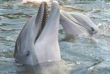 Swim With Dolphins-DRC / Swim with...watch...love.   / by Jean Mayo