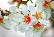 ♪♫♪♫♪  FLOWERS (CVIJECE)  ♪♫♪♫♪ /