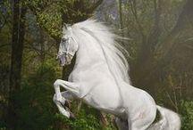 ♥♦♣♠   HORSES  ♥♦♣♠ / !! KONJSKE SNAGE !!