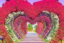 ✿ ღ ღ ✿  MIRACLE GARDEN DUBAI ✿ ღ ღ ✿ / ✿✿✿ LIFE IS BEAUTIFUL ✿✿✿
