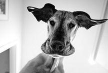 Animals / by Christian Straka
