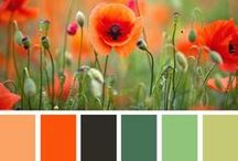 Color Inspiration / by Megan McGhee