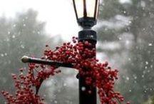 'Tis The Season of Christmas