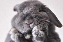 For the Boys / cute animals, pigs, bunnies