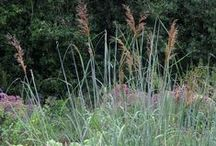 All Kinds of Grasses