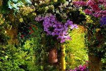 gardens / by Kristen Hurst-Dyche