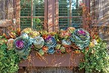 Falling for Fall... / by Hillside Garden Center, Inc.