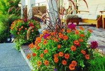 Alluring Annuals