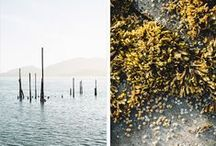Photography Inspiration / beautiful captures by lens / by Josie Skinner