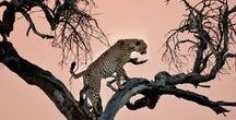 Africa Travel * / Travel tips, photos, inspiration and personal experiences to help you plan your trip to Africa