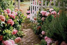 Garten & Pflanzen