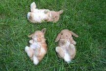 ❤ rabbits ❤
